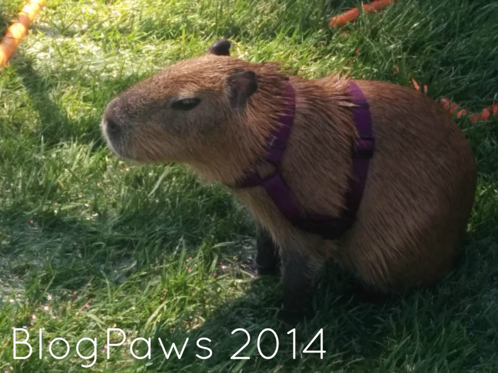 BlogPaws 2014 recap